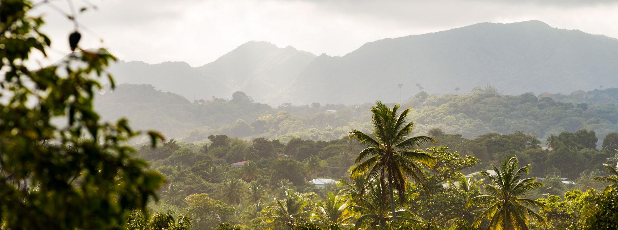 renegade rum, renegade rum distillery, renegade rum grenada, renegade rum distillery grenada, single cane rum, terroir driven rum, renegade rum cane fields, soils of grenada, caneco, sugar cane grenada, caribbean, mark reynier, why grenada
